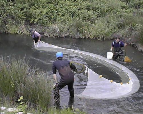 طرق صيد الأسماك في الأنهار