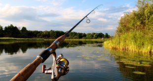 كيف تصطاد السمك بالسنارة