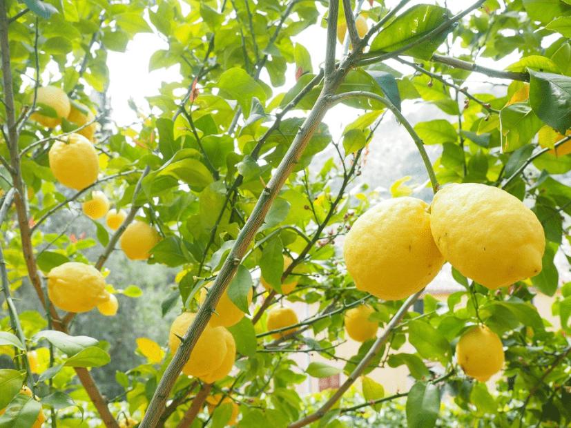 فوائد الليمون لحب الشباب