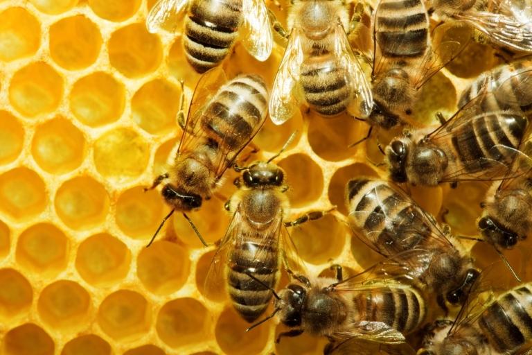 النحل ثلاثة أنواع ما هي