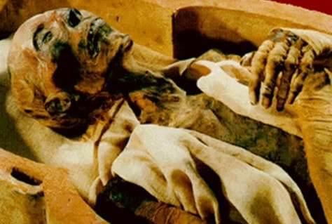 كم طول فرعون