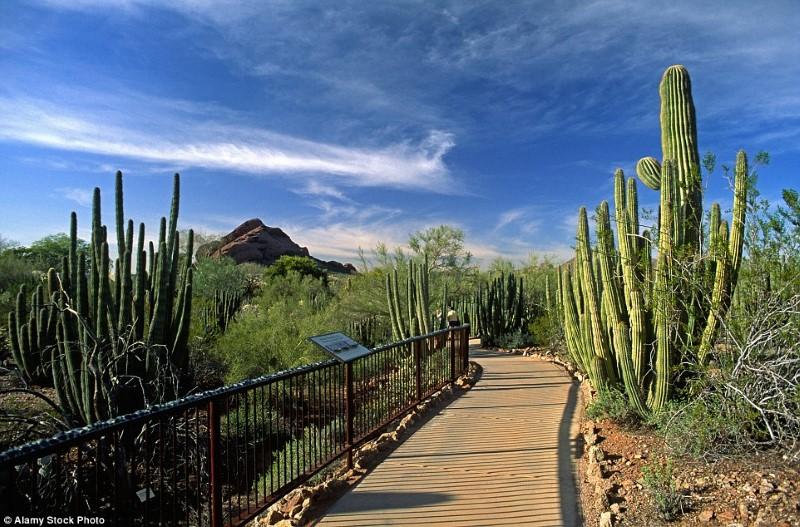 اجمل الحدائق في العالم- الحديقة النباتية الصحراوية، أريزونا، الولايات المتحدة الأميركية