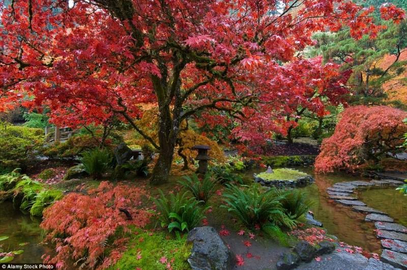 اجمل حدائق في العالم-حدائق بوتشارت في كندا