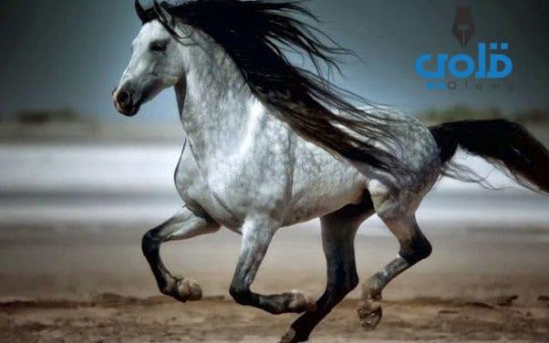 اجمل حصان