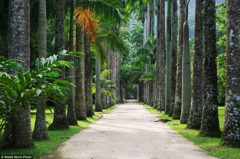 حديقة بوتانيكو، ريو دي جانيرو، البرازيل