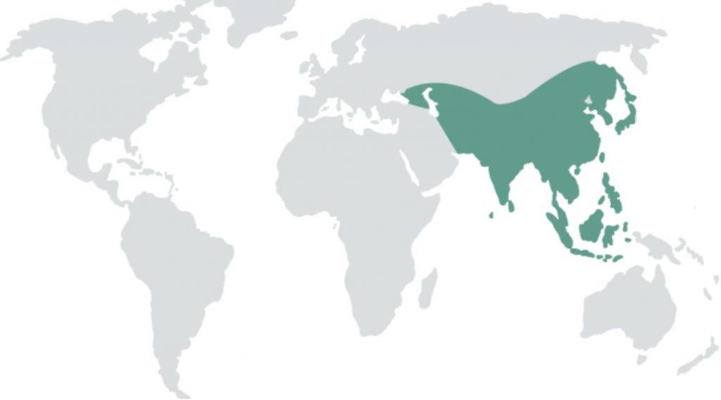 عدد الدول العربية في قارة آسيا