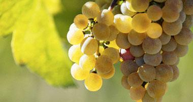 فوائد العنب الاصفر