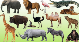 إذاعة مدرسية هل تعلم عن الحيوانات