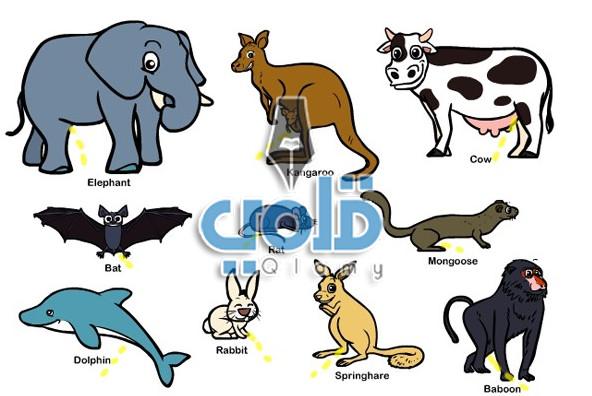 بحث عن الثدييات