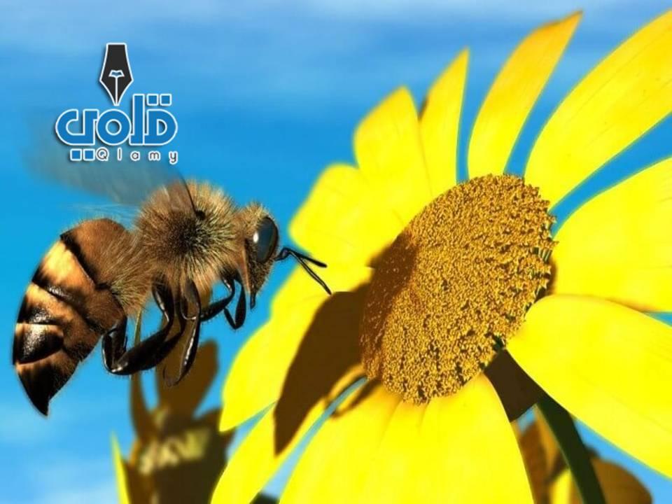 مملكة النحل