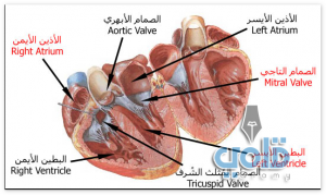 موضوع عن القلب