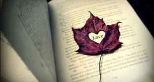 أجمل حكم الحب