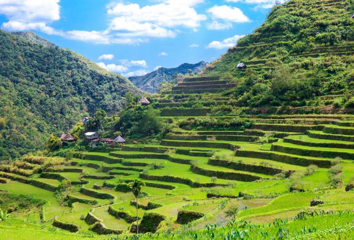 حقول الأرز - جزيرة لوزون