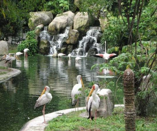 رحلتي الى ماليزيا العرب المسافرون - حديقة الطيور