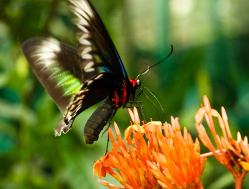 رحلتي الى ماليزيا العرب المسافرون - حديقة الفراشات