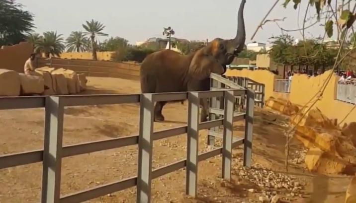 حديقة حيوانات الرياض - السياحة في السعودية بالصور
