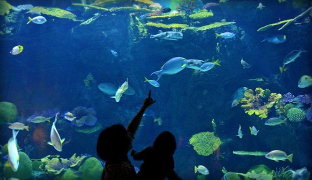 السياحة في بانكوك - عالم المحيط سي لايف